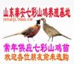 求购七彩山鸡、野鸡、山鸡成品鸡与山鸡淘汰母鸡