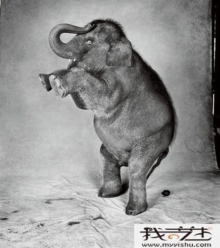 五年级动物铅笔画获奖作品