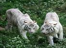 动物保护17