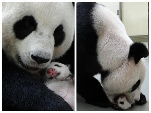 宝岛旅行网--台北动物园亲子照