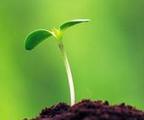 2014第五届河北种子、肥料及农药产品订货会