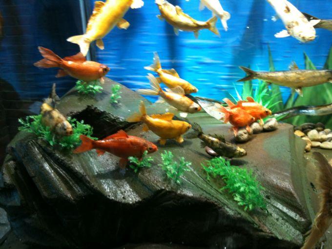 鱼类标本展馆2