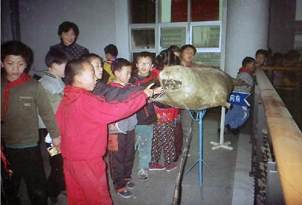 海洋哺乳动物中大型鲸鱼标本的制作工艺