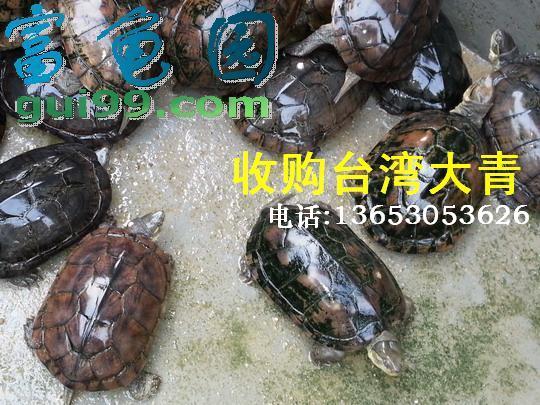 长期收购台湾大青