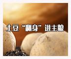 """土豆""""翻身""""进主粮"""